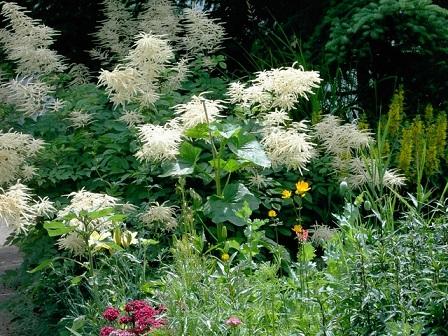 Tuin Laten Aanleggen : Een tuin laten aanleggen door een tuinman